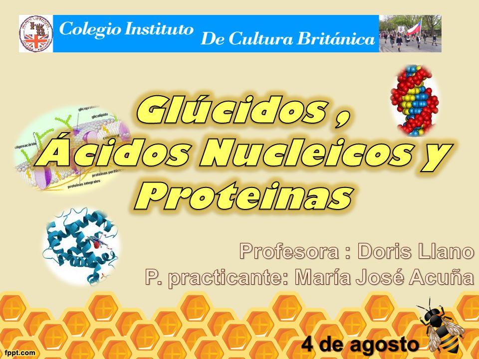 Glúcidos , Ácidos Nucleicos y Proteinas