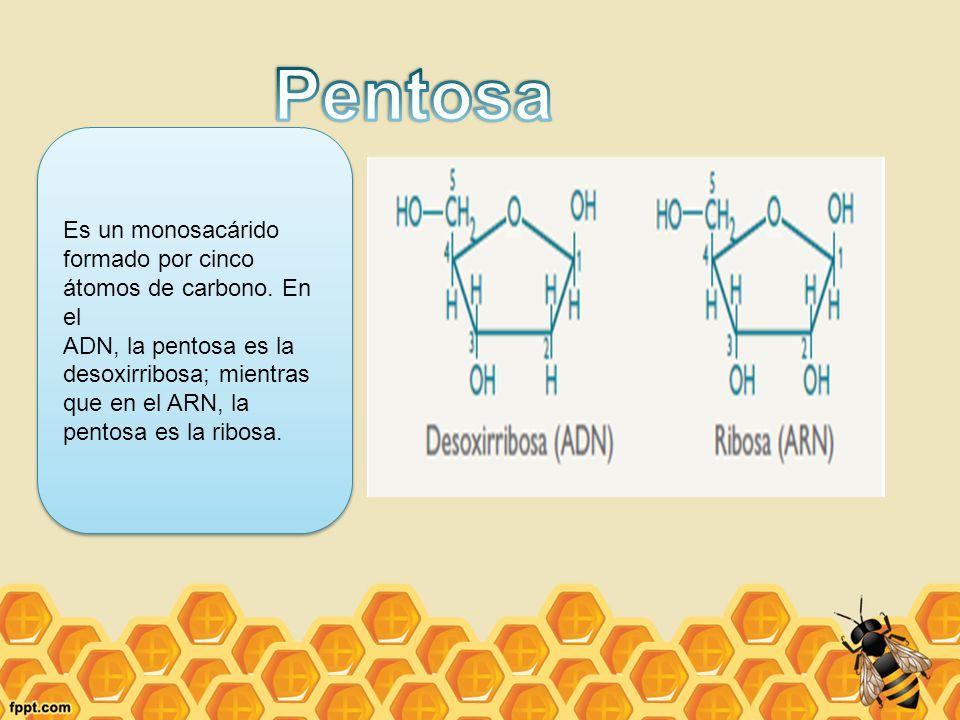 Pentosa Es un monosacárido formado por cinco átomos de carbono. En el