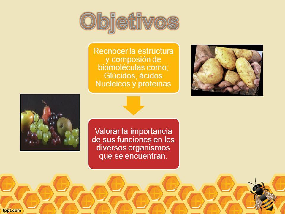 Objetivos Recnocer la estructura y composión de biomoléculas como; Glúcidos, ácidos Nucleicos y proteinas.