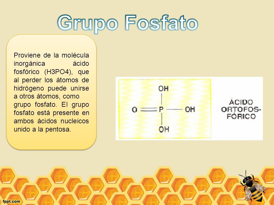 Grupo Fosfato Proviene de la molécula inorgánica ácido fosfórico (H3PO4), que al perder los átomos de hidrógeno puede unirse a otros átomos, como.