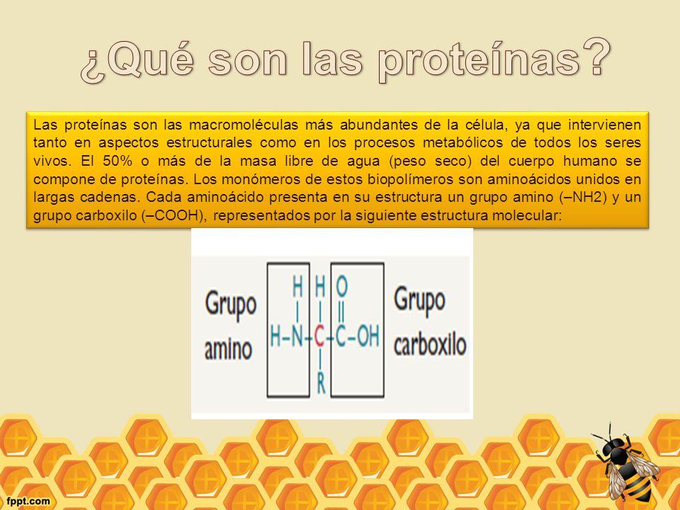 ¿Qué son las proteínas