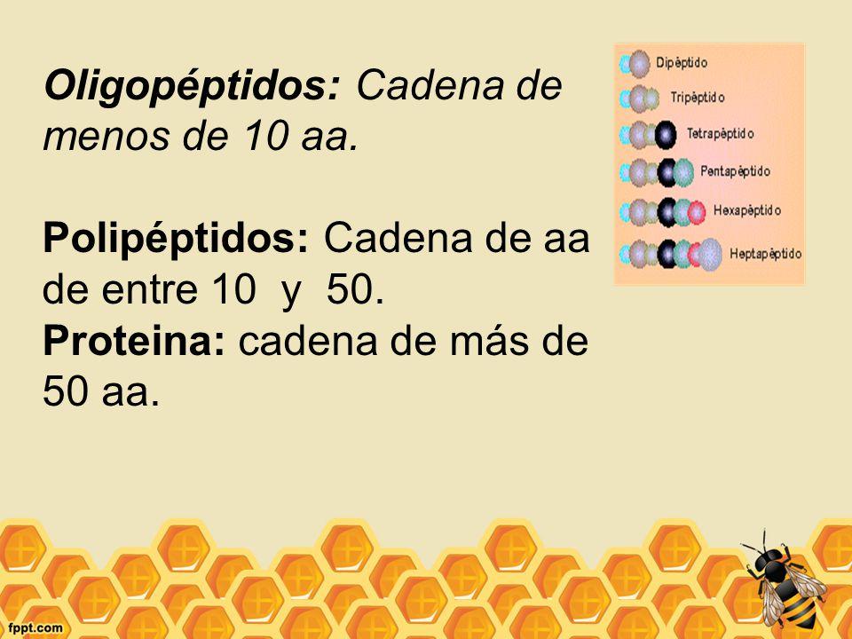 Oligopéptidos: Cadena de menos de 10 aa.