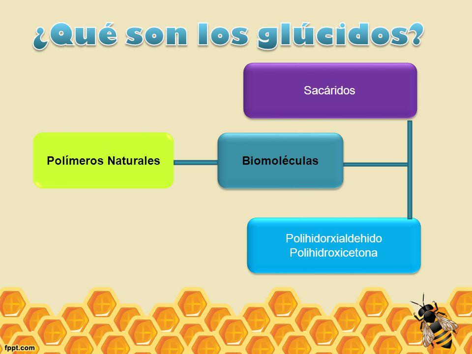 ¿Qué son los glúcidos Sacáridos Polímeros Naturales Biomoléculas