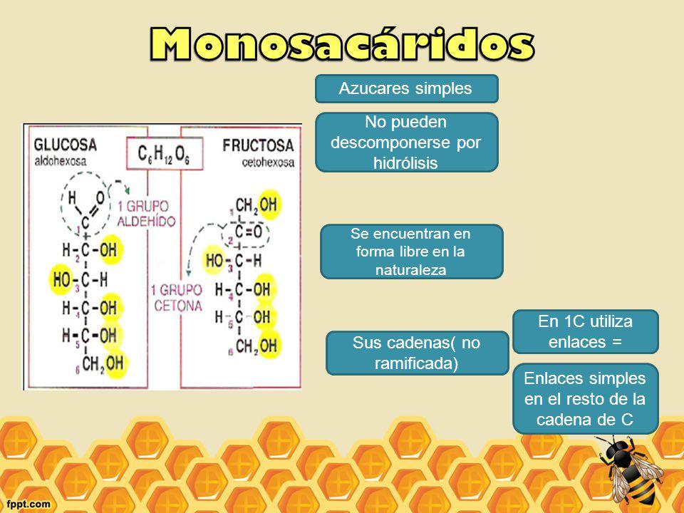 Monosacáridos Azucares simples No pueden descomponerse por hidrólisis