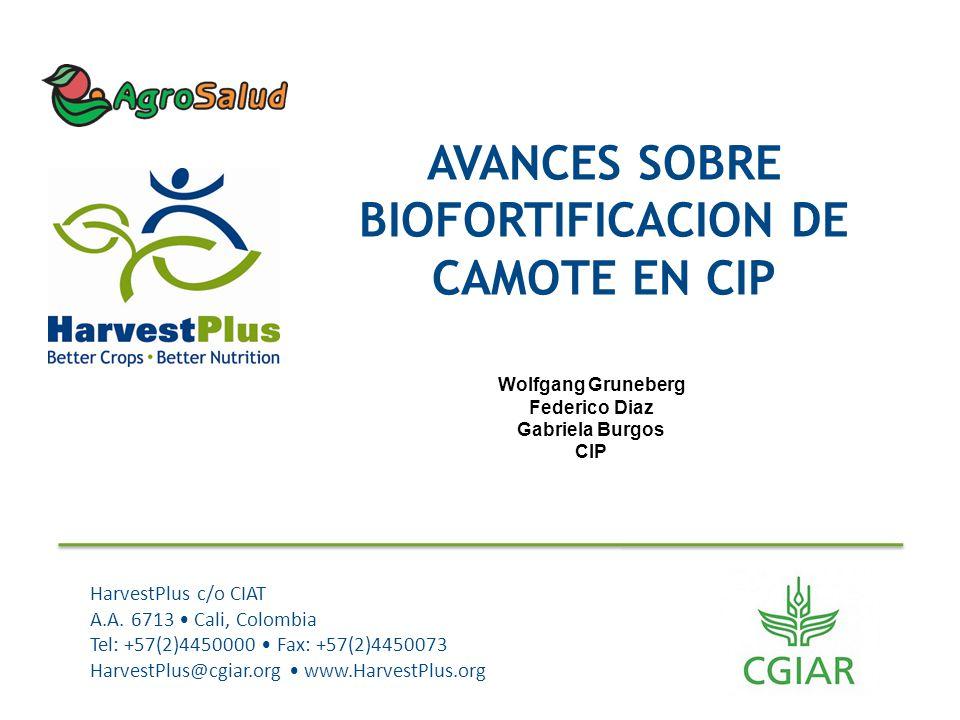 AVANCES SOBRE BIOFORTIFICACION DE CAMOTE EN CIP
