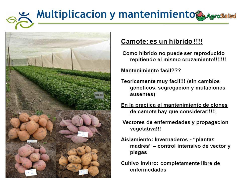 Multiplicacion y mantenimiento