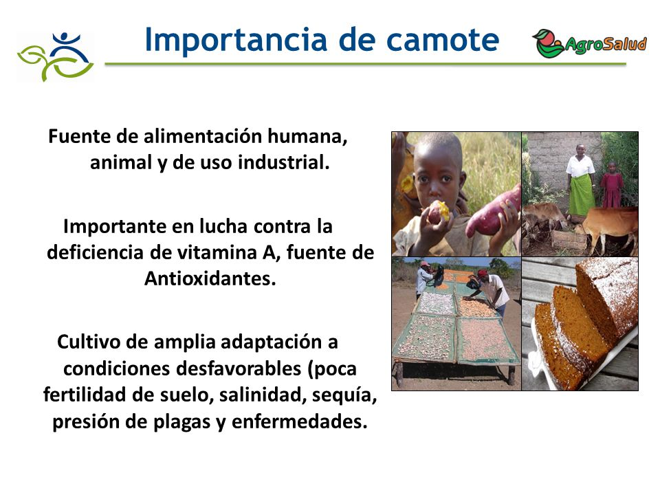 Fuente de alimentación humana, animal y de uso industrial.