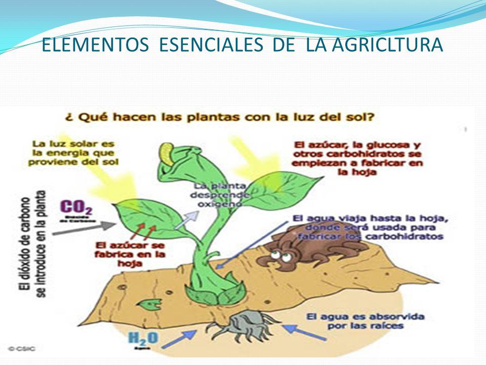 ELEMENTOS ESENCIALES DE LA AGRICLTURA