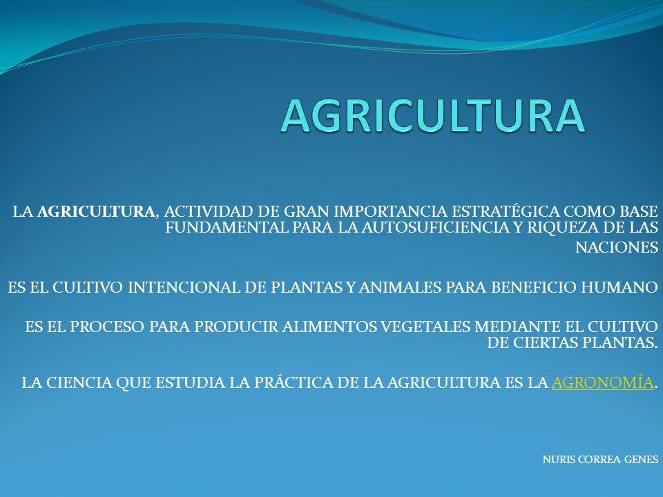 AGRICULTURA LA AGRICULTURA, ACTIVIDAD DE GRAN IMPORTANCIA ESTRATÉGICA COMO BASE FUNDAMENTAL PARA LA AUTOSUFICIENCIA Y RIQUEZA DE LAS.