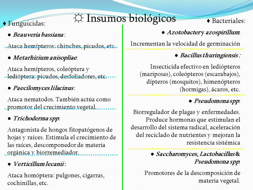 ☼ Insumos biológicos ♦ Bacteriales: ♦ Funguicidas: