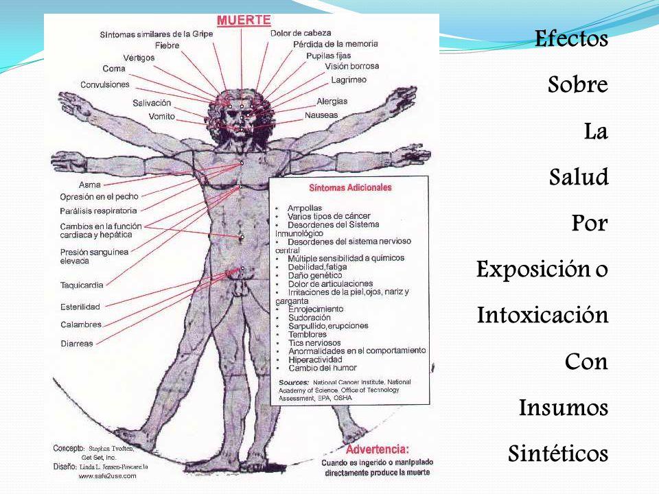 Efectos Sobre La Salud Por Exposición o Intoxicación Con Insumos Sintéticos