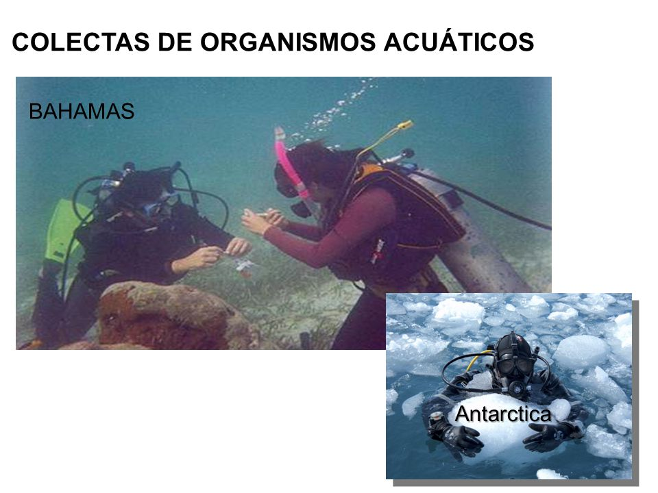 COLECTAS DE ORGANISMOS ACUÁTICOS