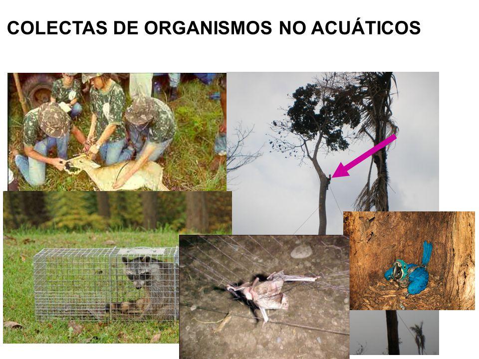 COLECTAS DE ORGANISMOS NO ACUÁTICOS