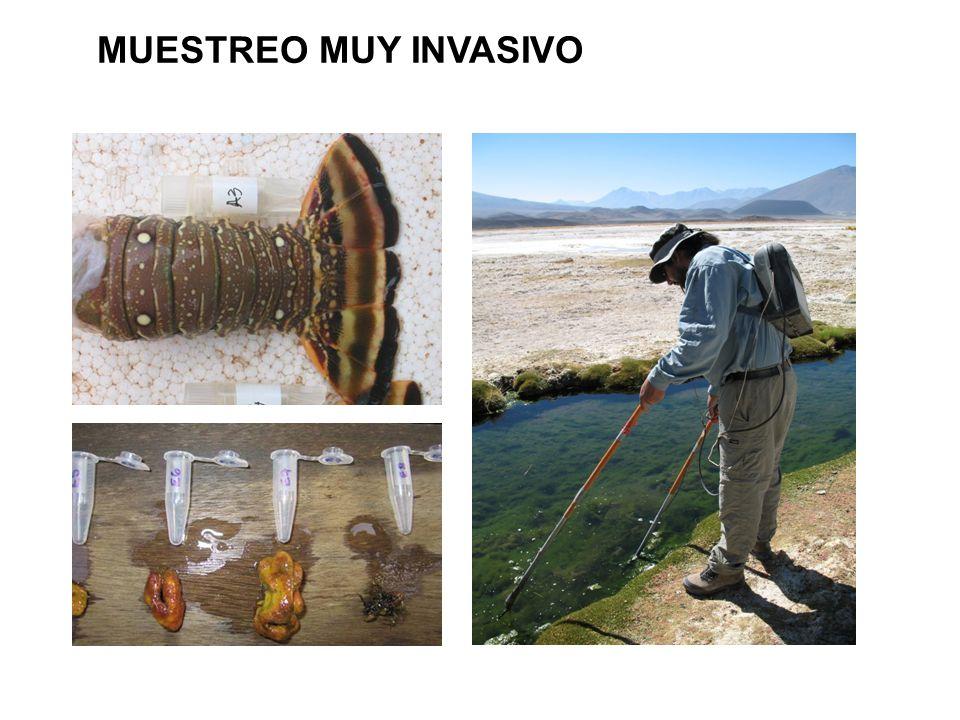 MUESTREO MUY INVASIVO 20