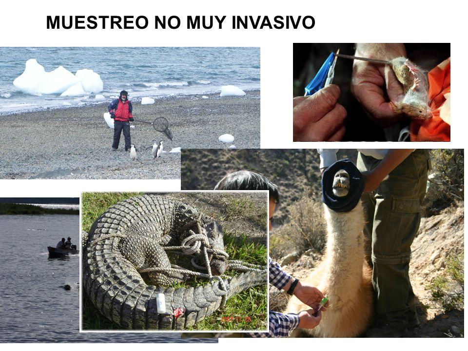 MUESTREO NO MUY INVASIVO