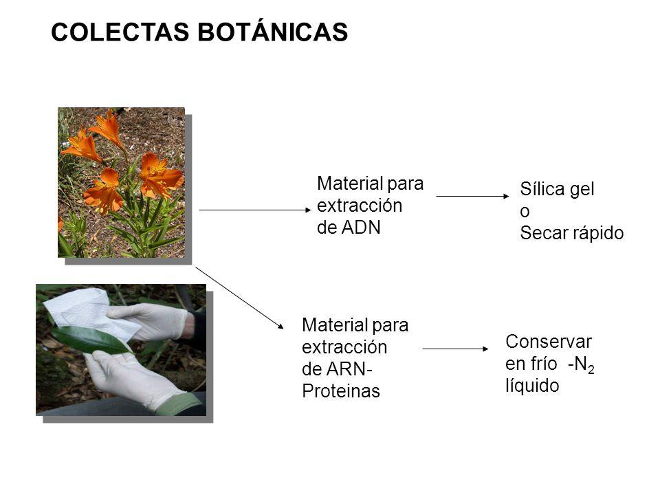 COLECTAS BOTÁNICAS Material para extracción de ADN Sílica gel o