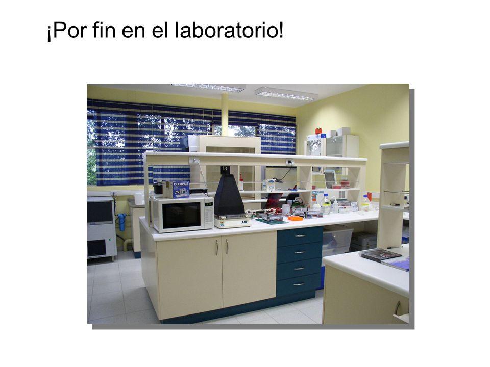 ¡Por fin en el laboratorio!