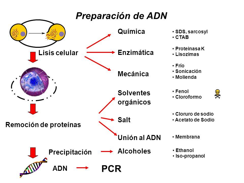Preparación de ADN PCR Química Enzimática Mecánica Lisis celular