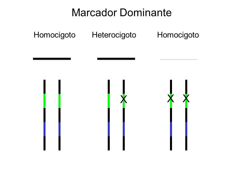 Marcador Dominante Homocigoto Heterocigoto Homocigoto X X X