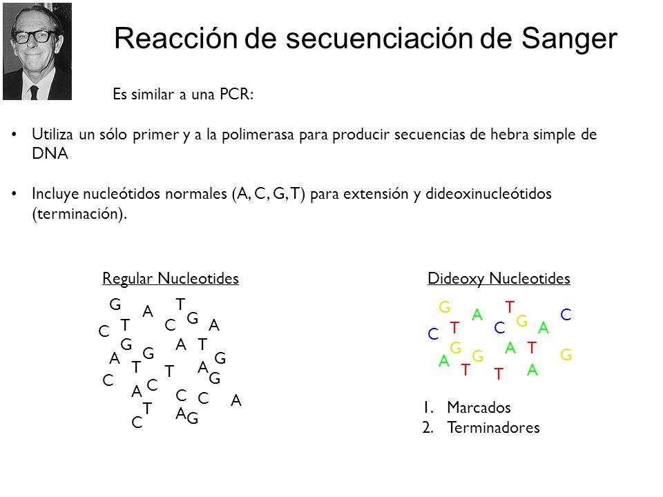 Reacción de secuenciación de Sanger