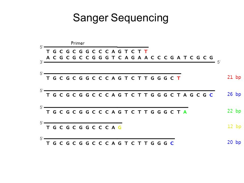 Sanger Sequencing T G C G C G G C C C A G T C T T