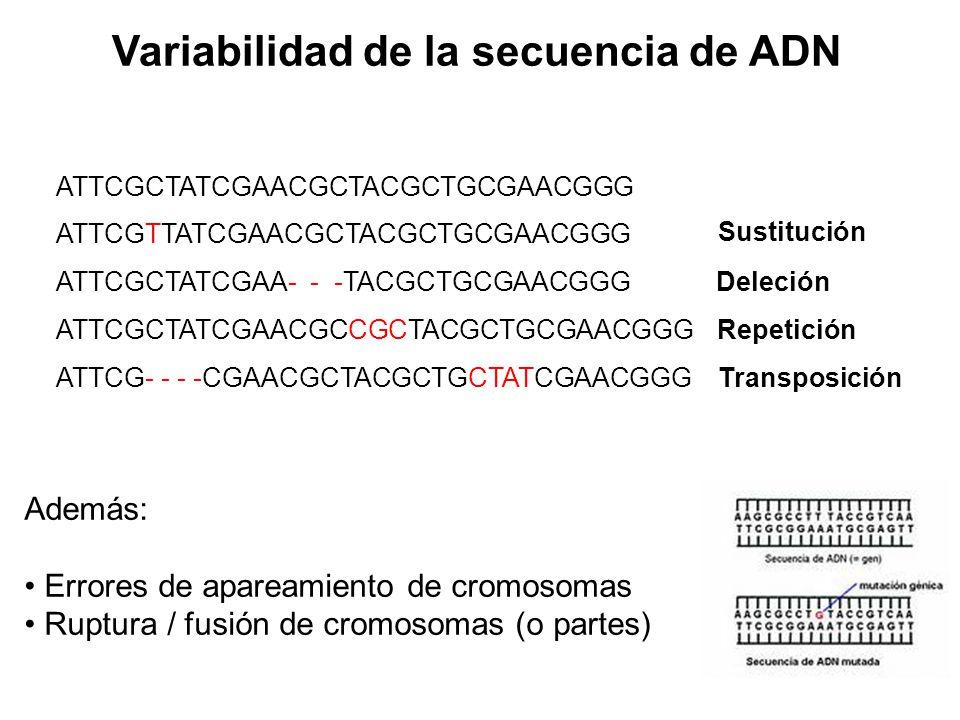 Variabilidad de la secuencia de ADN