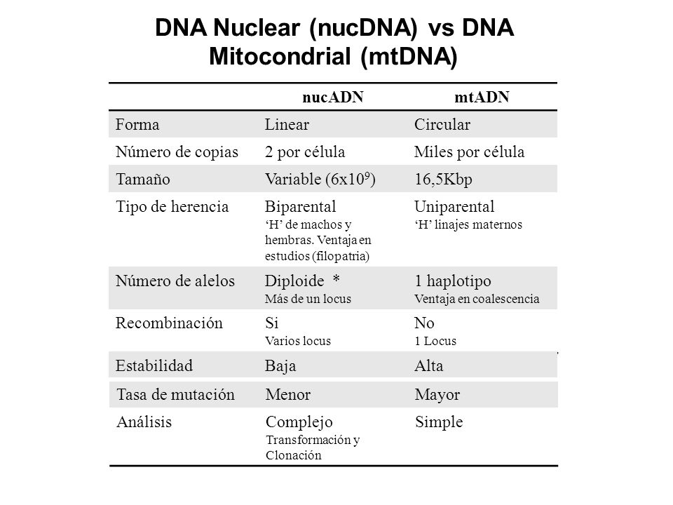 DNA Nuclear (nucDNA) vs DNA Mitocondrial (mtDNA)