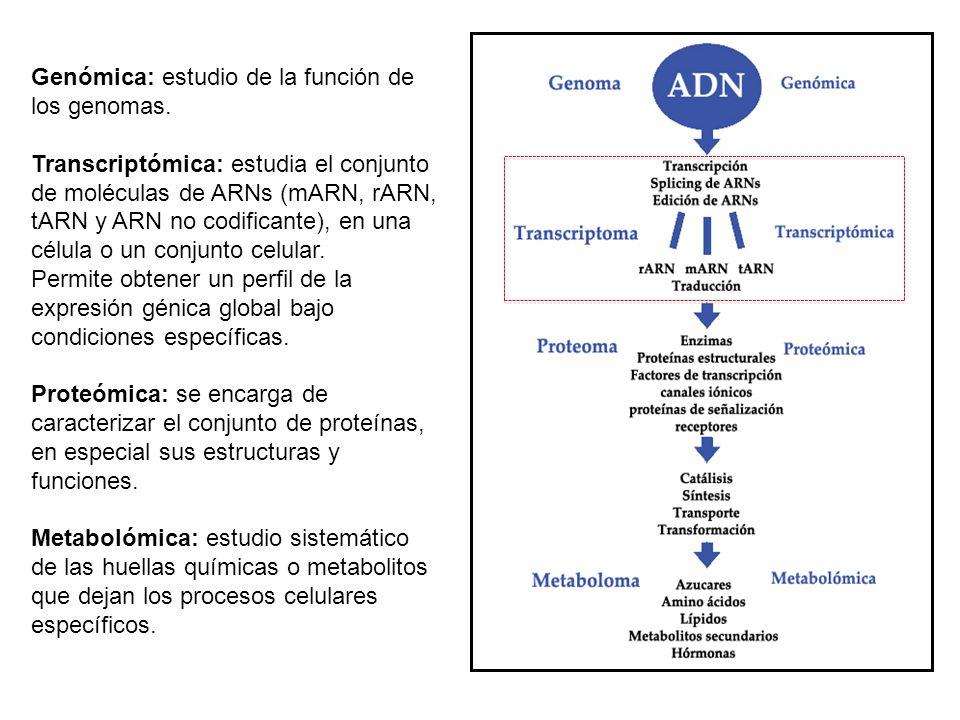 Genómica: estudio de la función de los genomas.