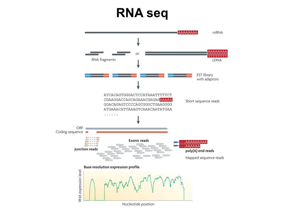 RNA seq