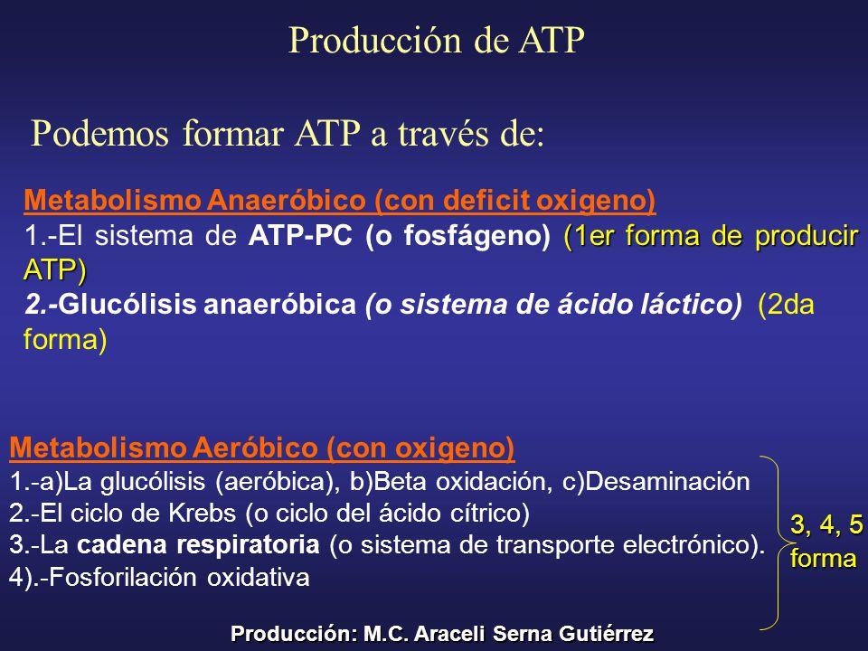 Podemos formar ATP a través de: