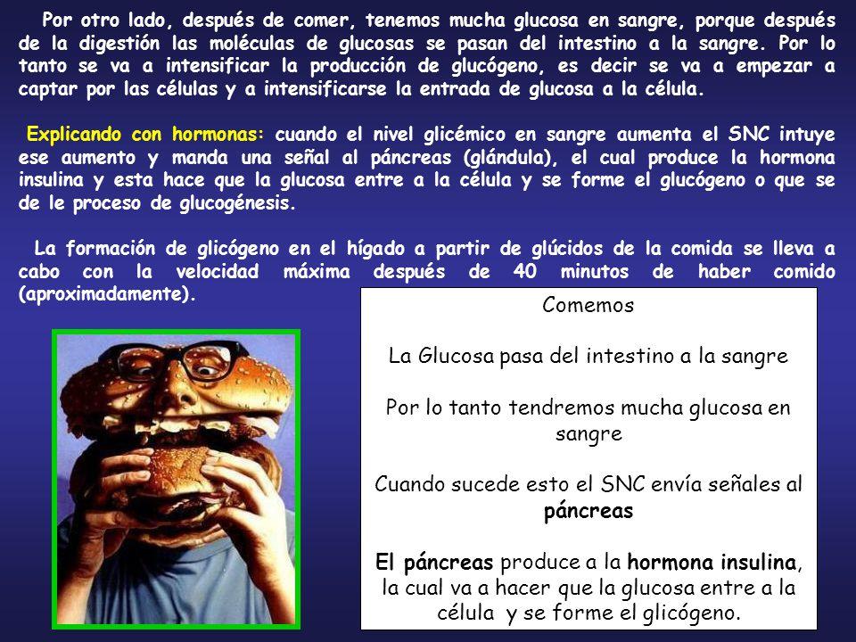 La Glucosa pasa del intestino a la sangre