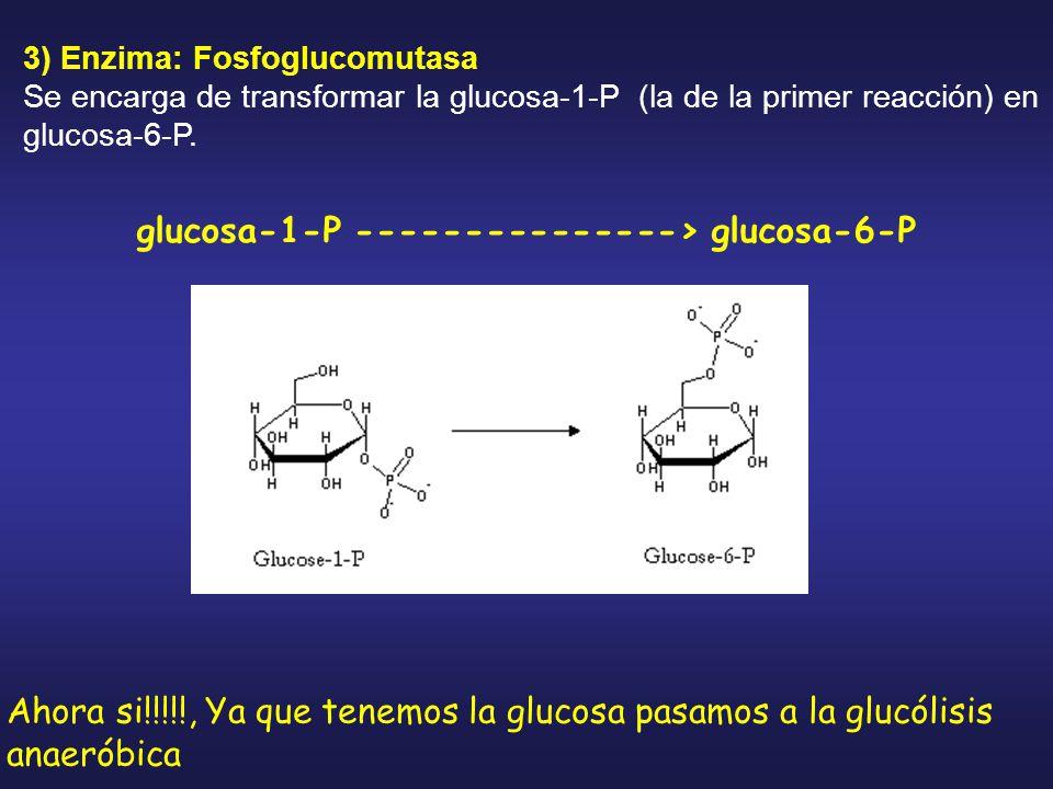 glucosa-1-P ---------------> glucosa-6-P