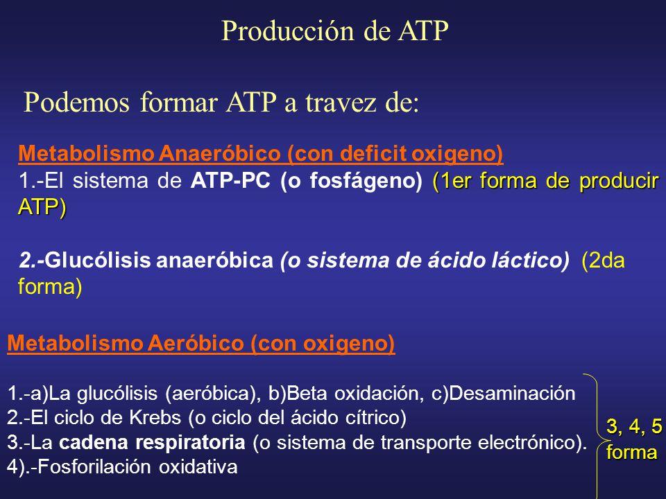 Podemos formar ATP a travez de: