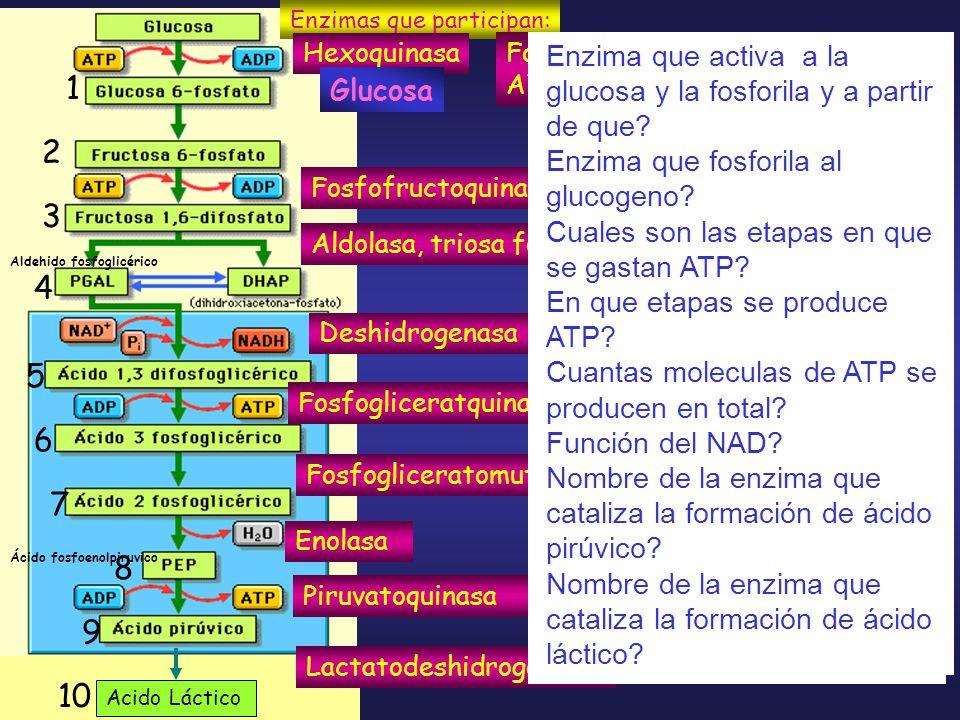 1 2 3 4 5 6 7 8 9 10 Glucosa Glucogeno OXIDACION – REDUCCION (REDOX )
