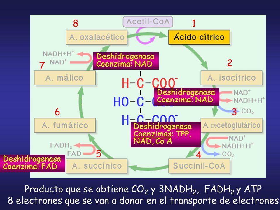 Producto que se obtiene CO2 y 3NADH2, FADH2 y ATP