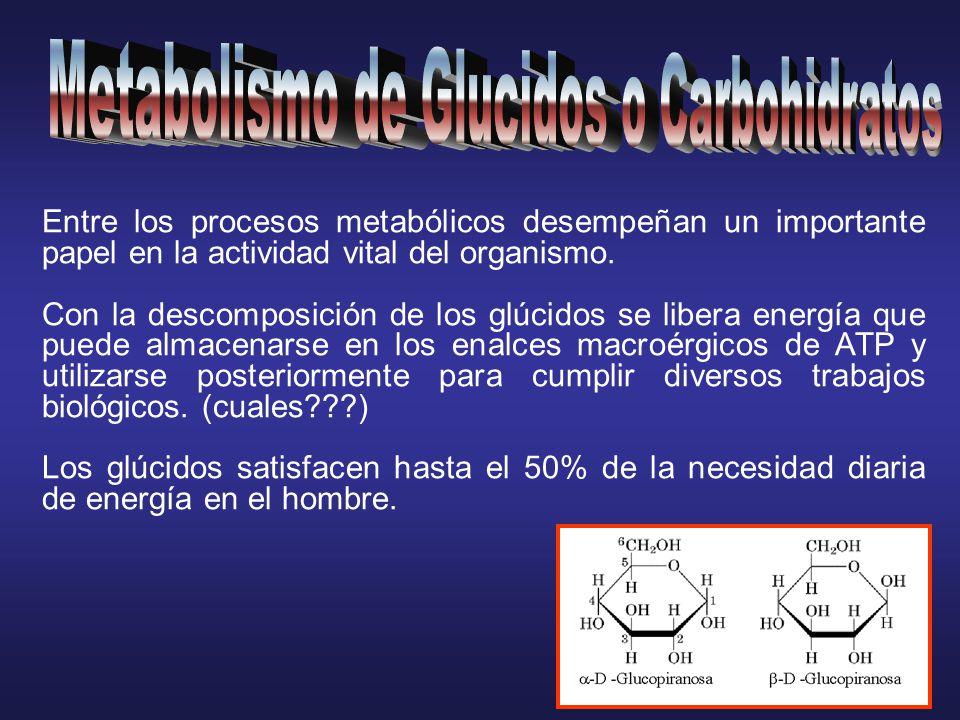 Metabolismo de Glucidos o Carbohidratos