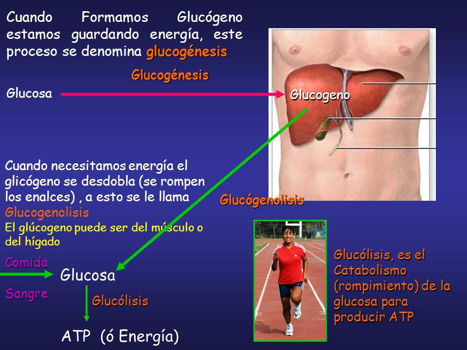 Glucosa ATP (ó Energía)