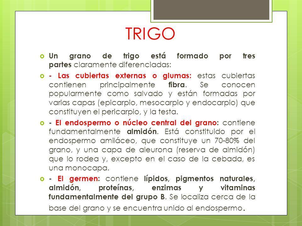 TRIGO Un grano de trigo está formado por tres partes claramente diferenciadas: