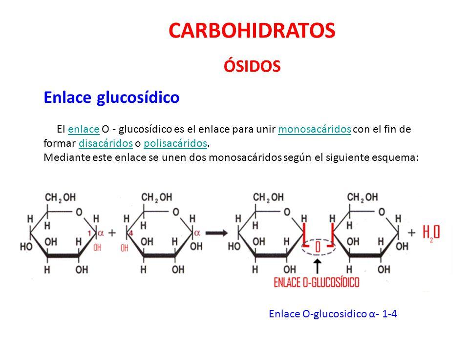 CARBOHIDRATOS ÓSIDOS Enlace glucosídico