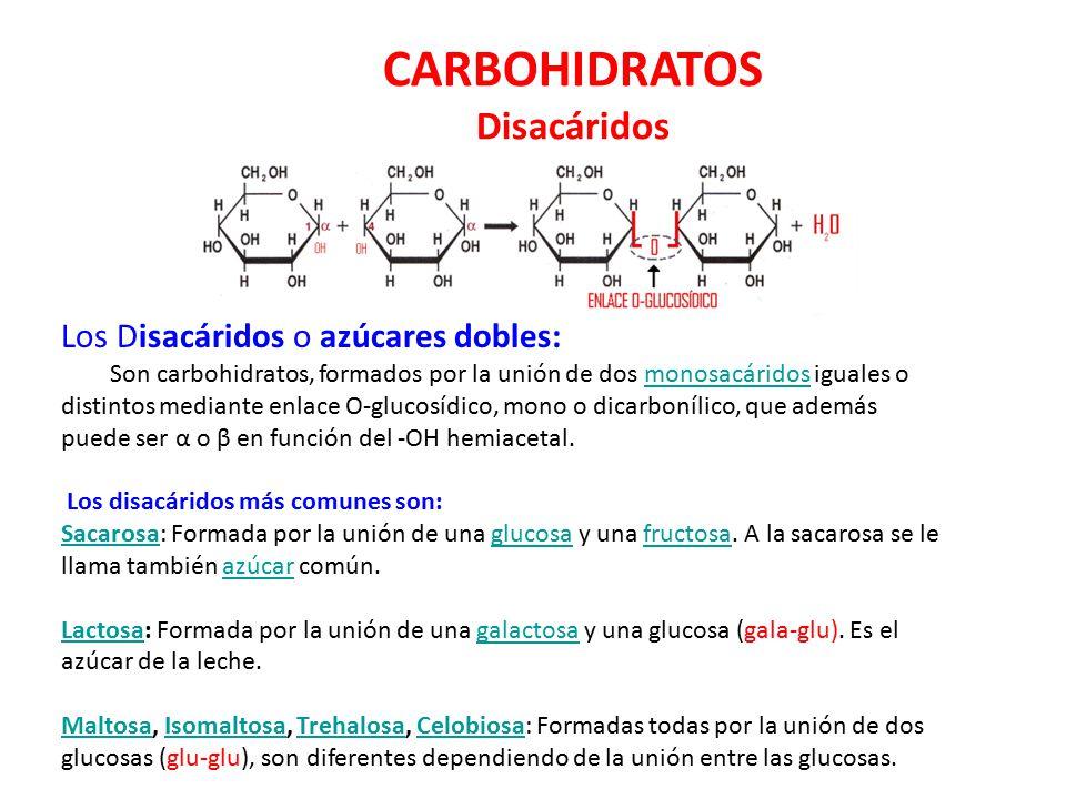 CARBOHIDRATOS Disacáridos Los Disacáridos o azúcares dobles:
