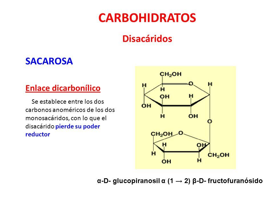 CARBOHIDRATOS Disacáridos SACAROSA Enlace dicarbonílico