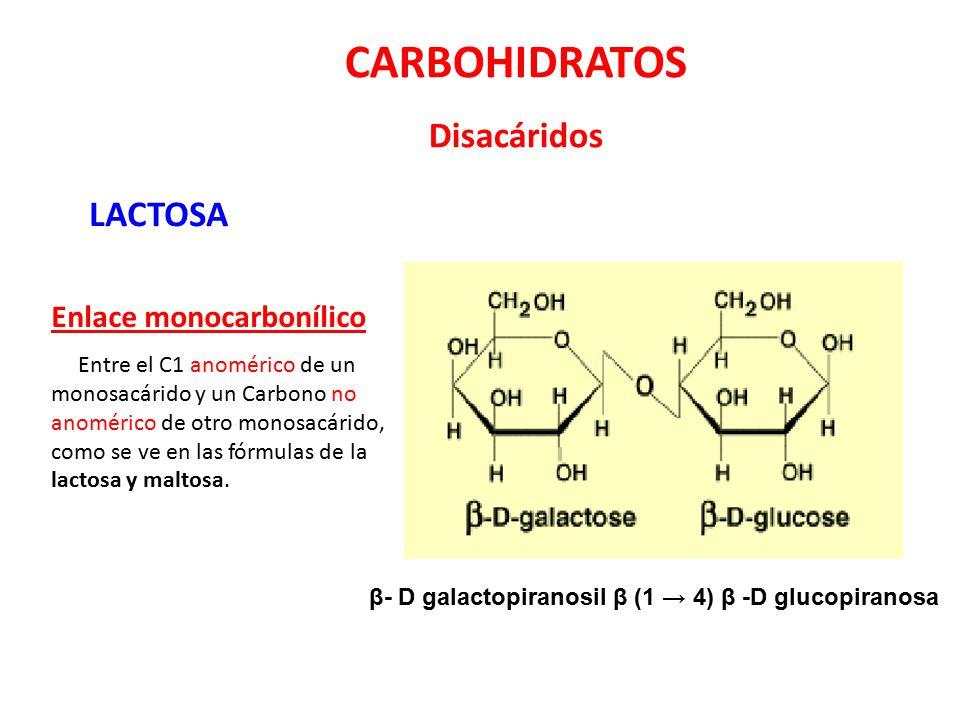 CARBOHIDRATOS Disacáridos LACTOSA Enlace monocarbonílico