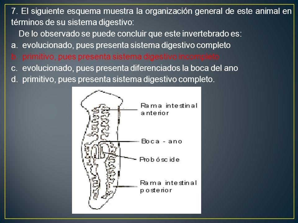 7. El siguiente esquema muestra la organización general de este animal en términos de su sistema digestivo: