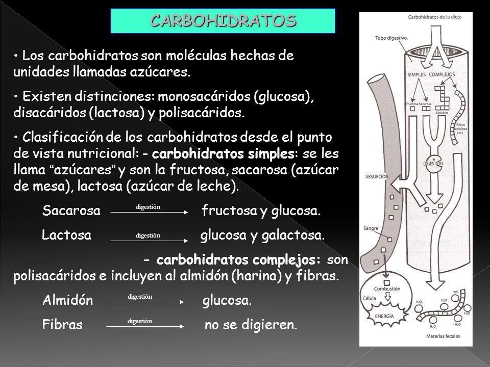 CARBOHIDRATOS Los carbohidratos son moléculas hechas de unidades llamadas azúcares.