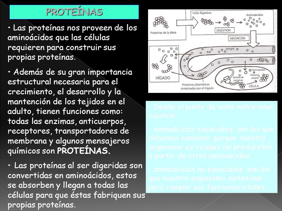 PROTEÍNAS Las proteínas nos proveen de los aminoácidos que las células requieren para construir sus propias proteínas.