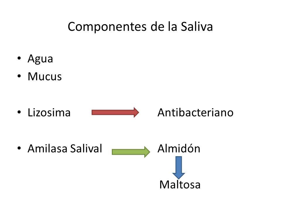 Componentes de la Saliva