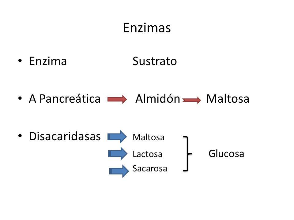Enzimas Enzima Sustrato A Pancreática Almidón Maltosa
