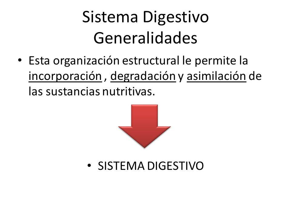 Sistema Digestivo Generalidades