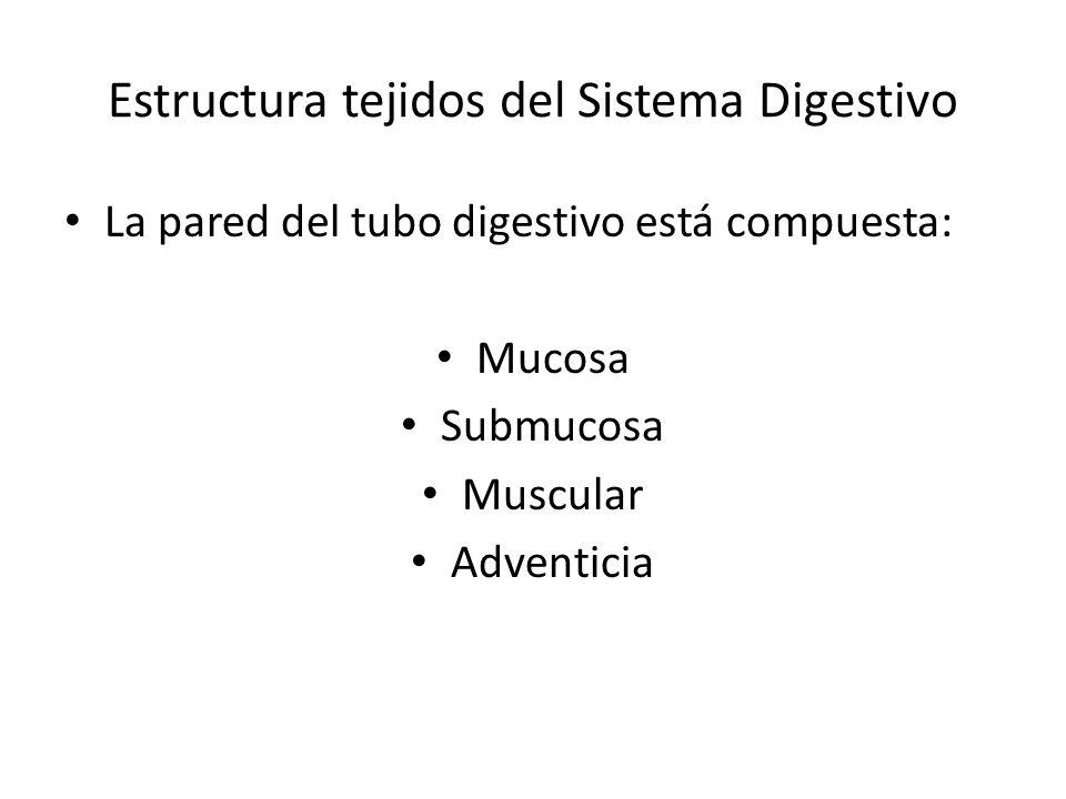 Estructura tejidos del Sistema Digestivo