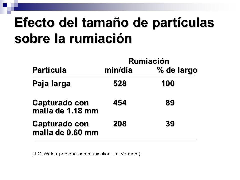 Efecto del tamaño de partículas sobre la rumiación